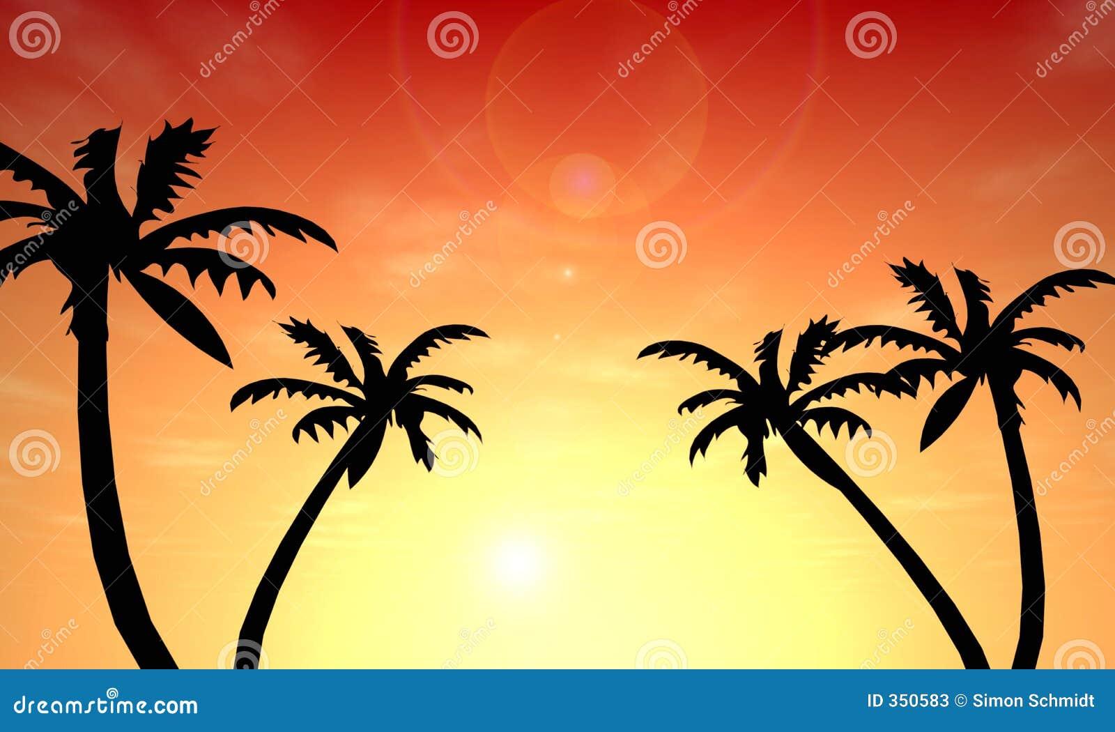 De Zonsondergang van de palm