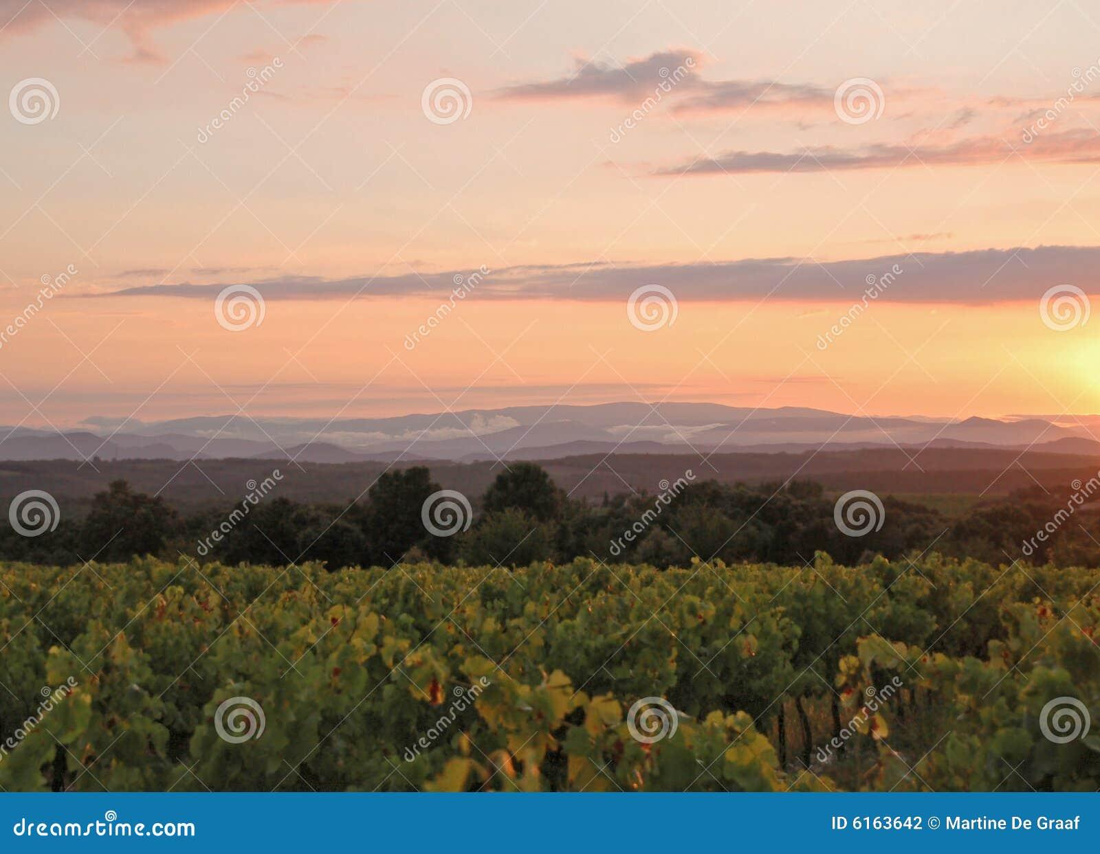 De Zonsondergang van de wijngaard