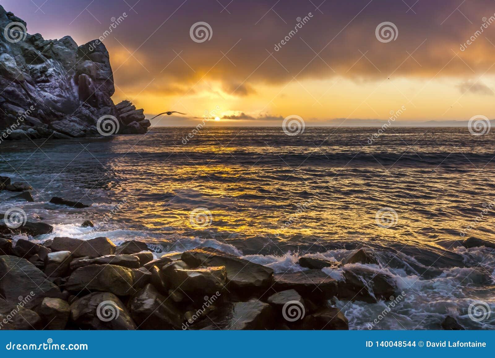 De Zonsondergang van de Morrobaai met Meeuw