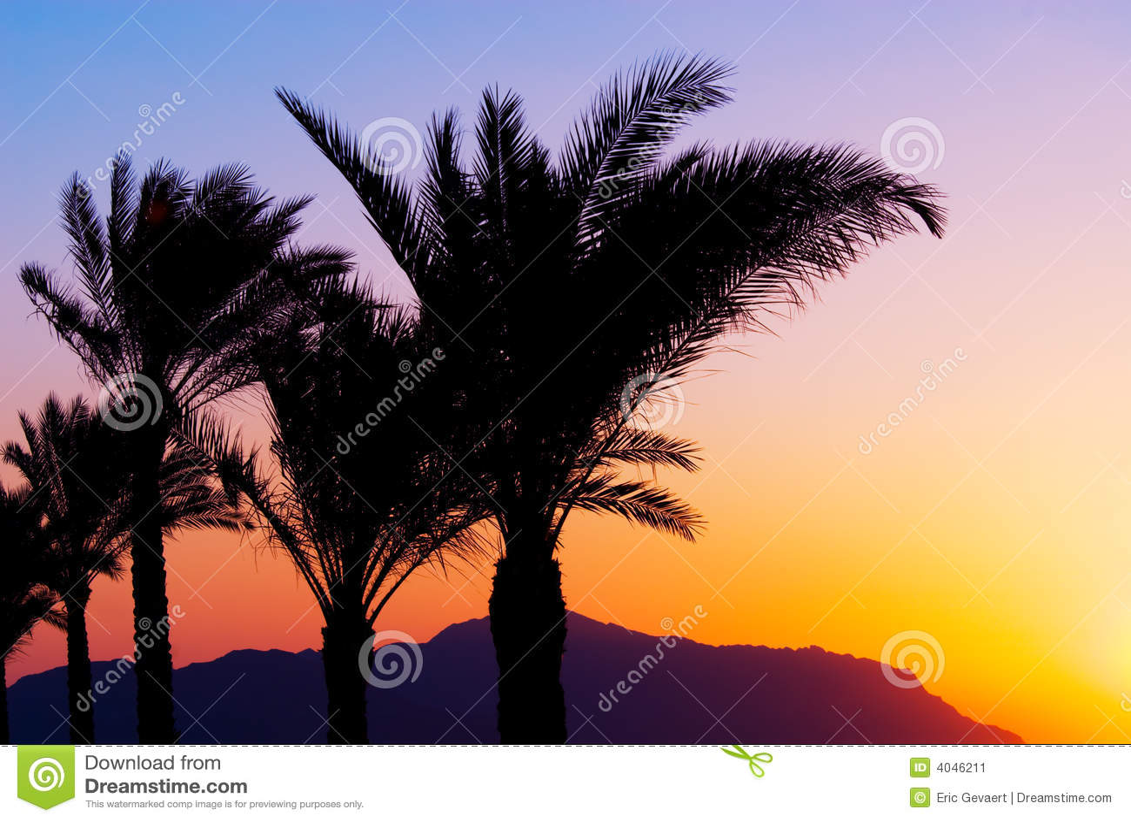De zonsondergang van Palmtree