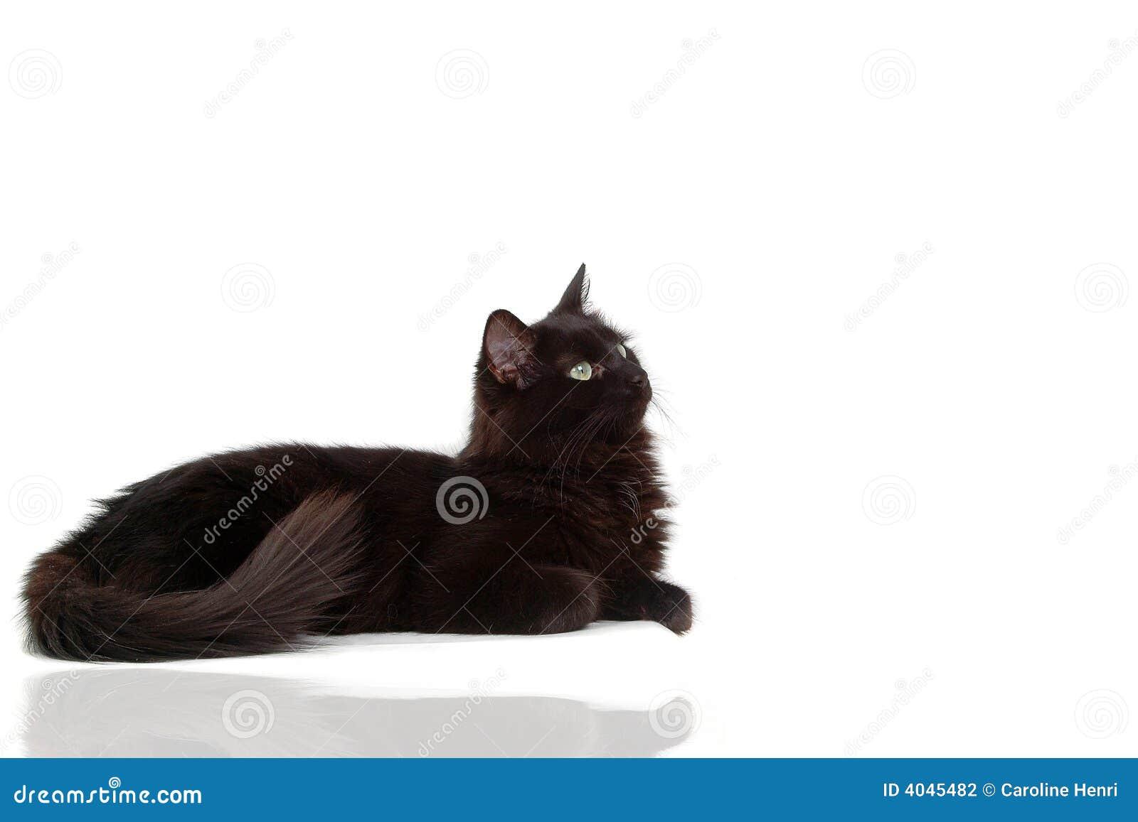 De zwarte kat met denkt na stock fotografie afbeelding 4045482 - Na de zwarte bank ...