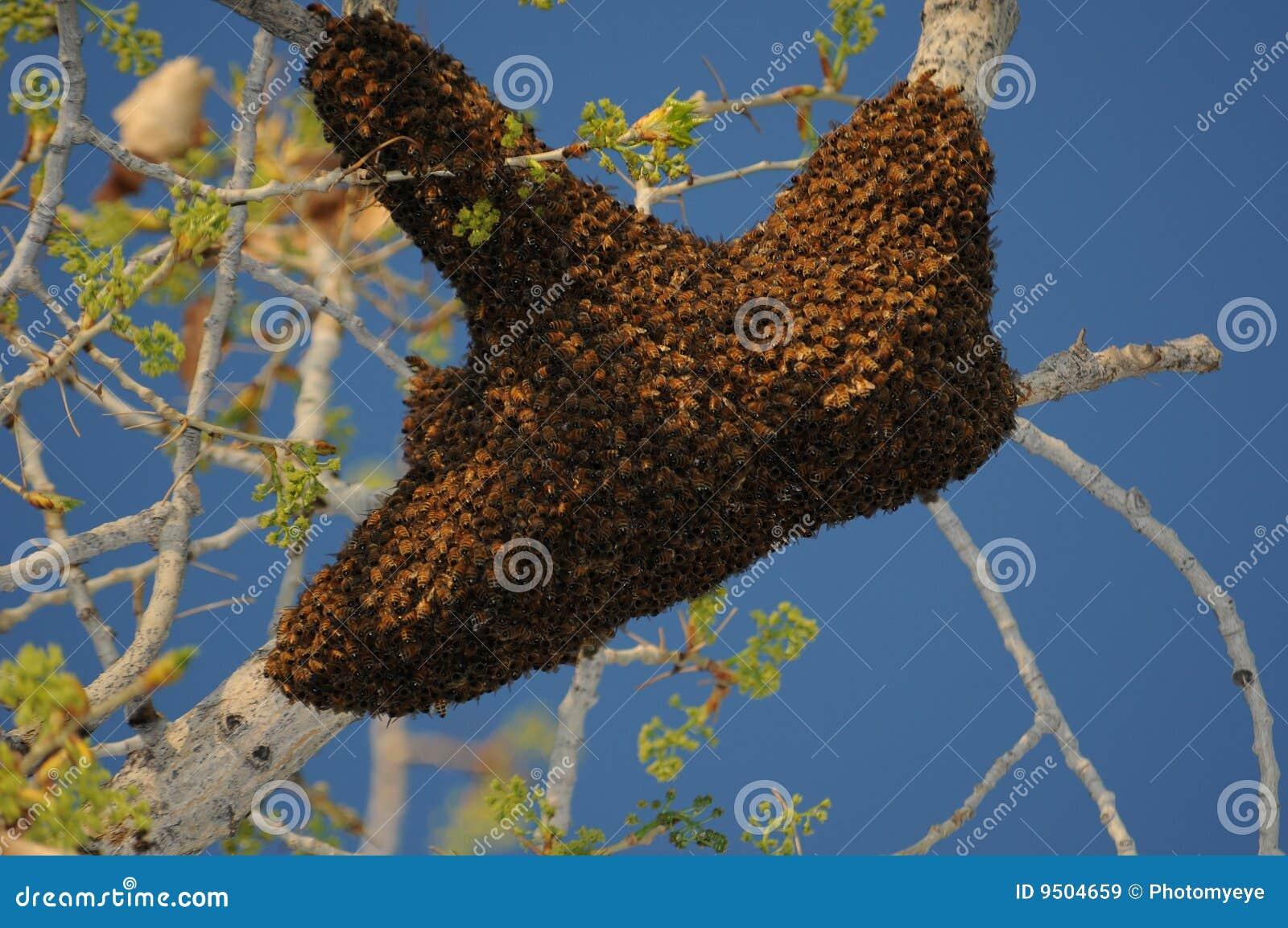 De Zwerm van de Bij van de honing