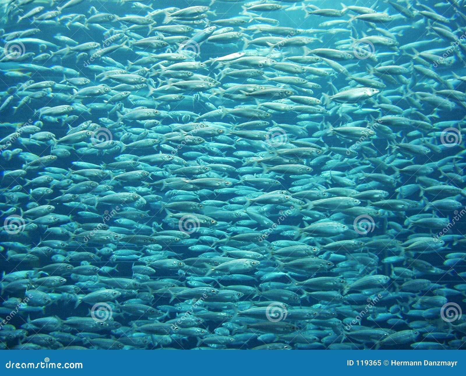 De zwerm van vissen