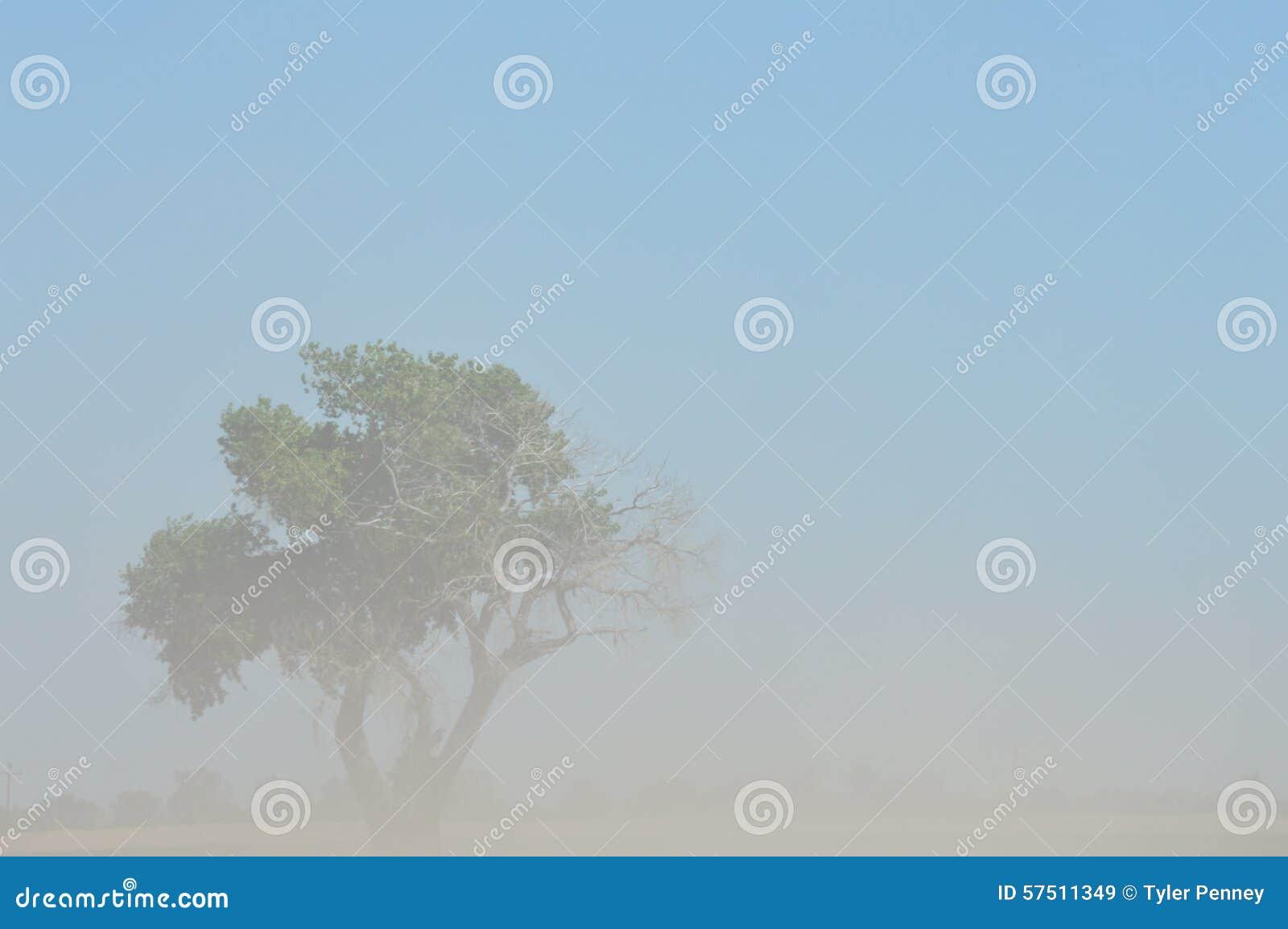 Dead And Alive Stock Image Image Of Dust Tree Arizona 57511349
