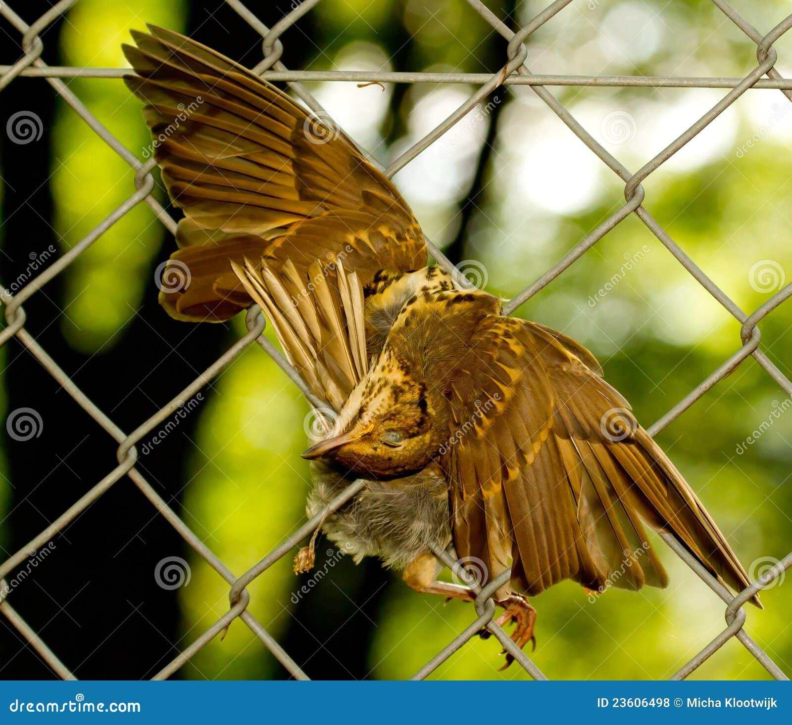 A dead bird is hanging