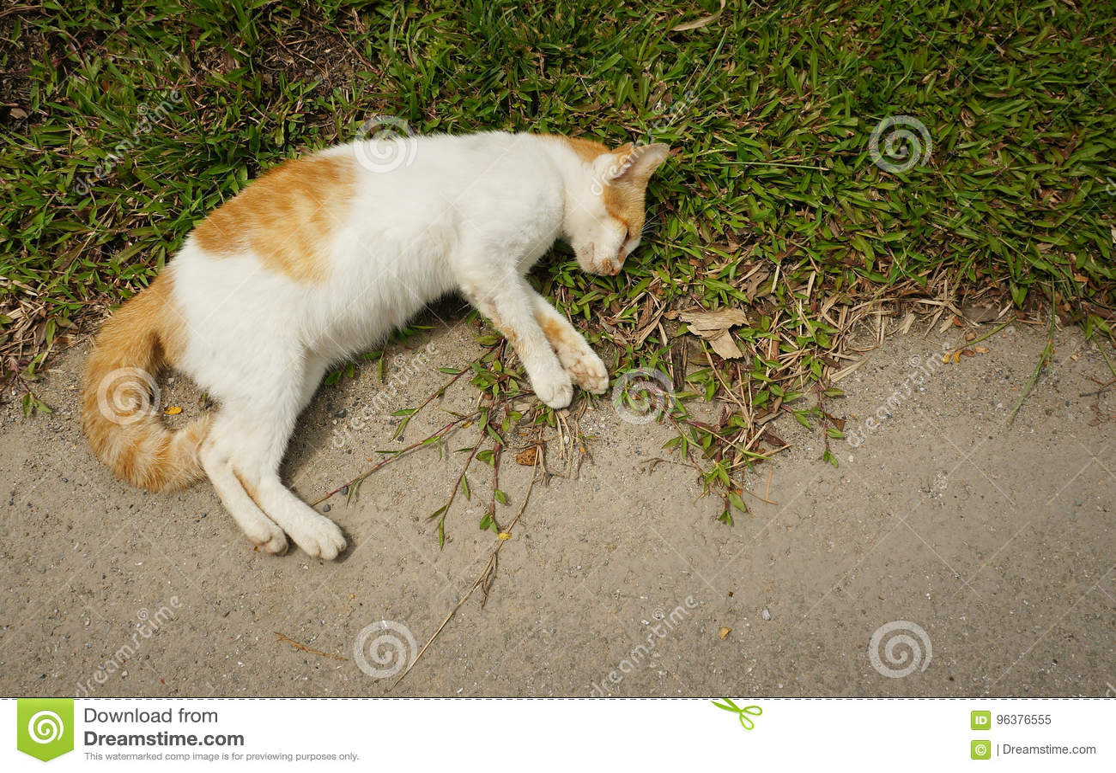 cat poop fudge