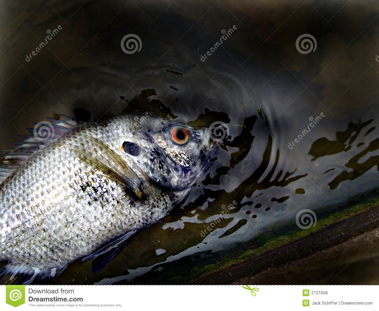 What dreams of a dead fish 100