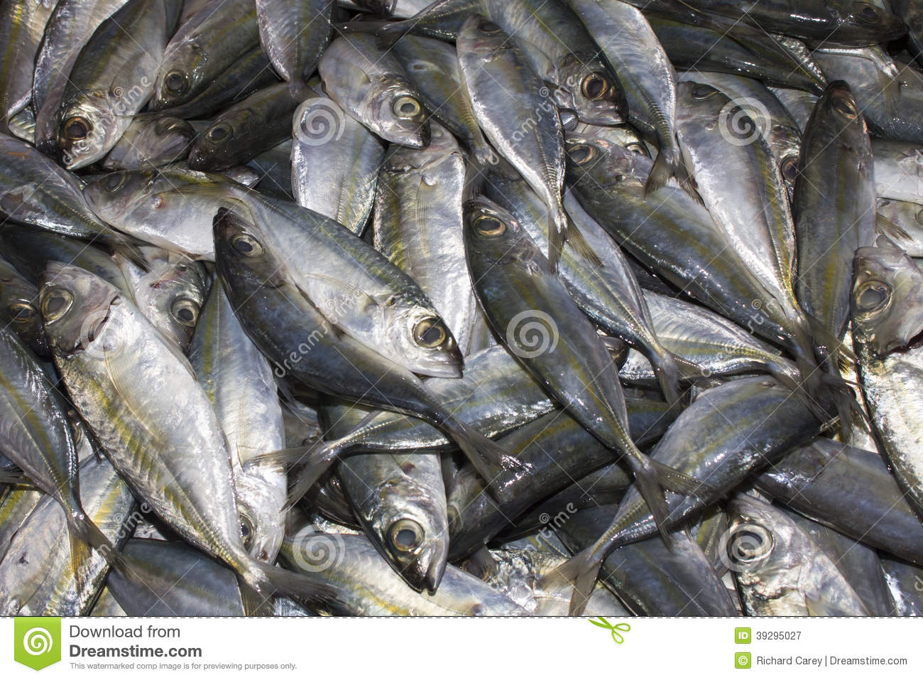 Dead fish at market stock image  Image of fishing