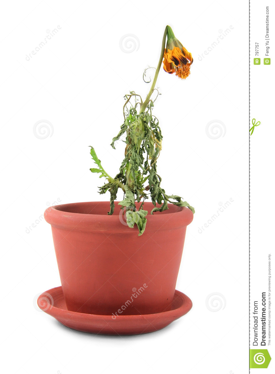 clipart dead flowers - photo #14