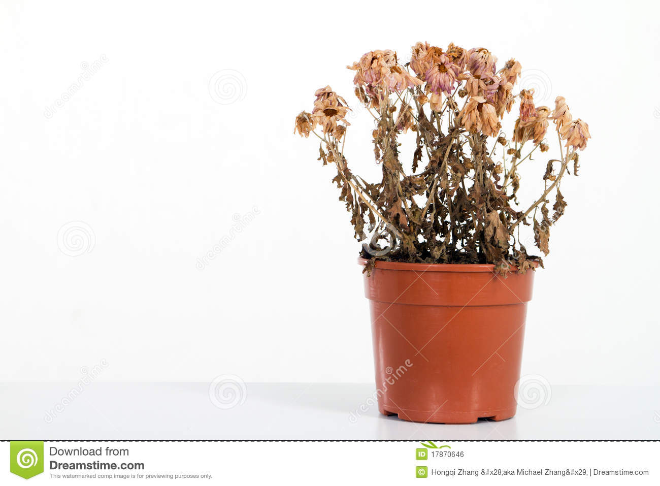 clipart dead flowers - photo #38