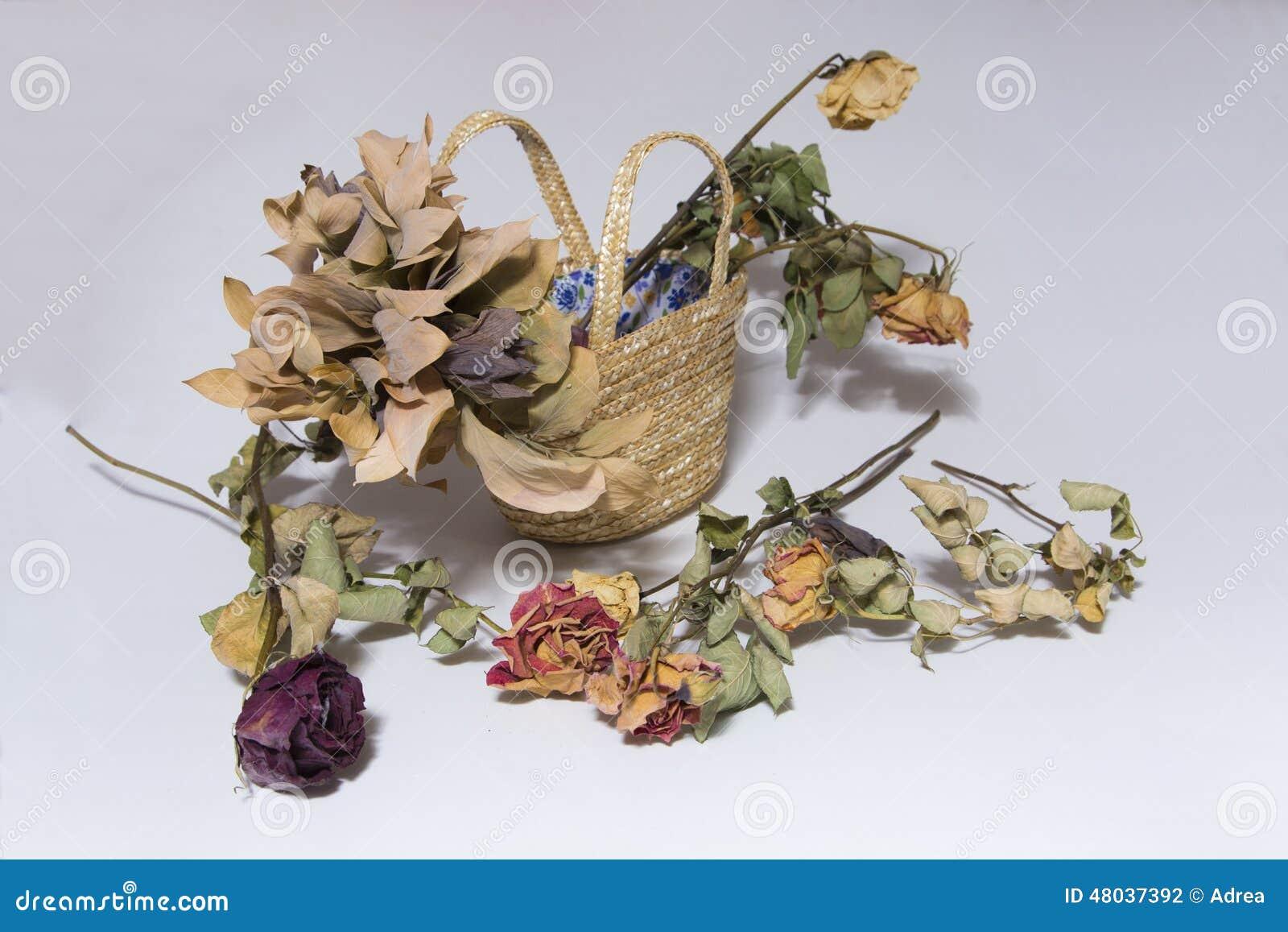 Dead Flowers Stock Photo Image Of Beauty Love Beautiful 48037392