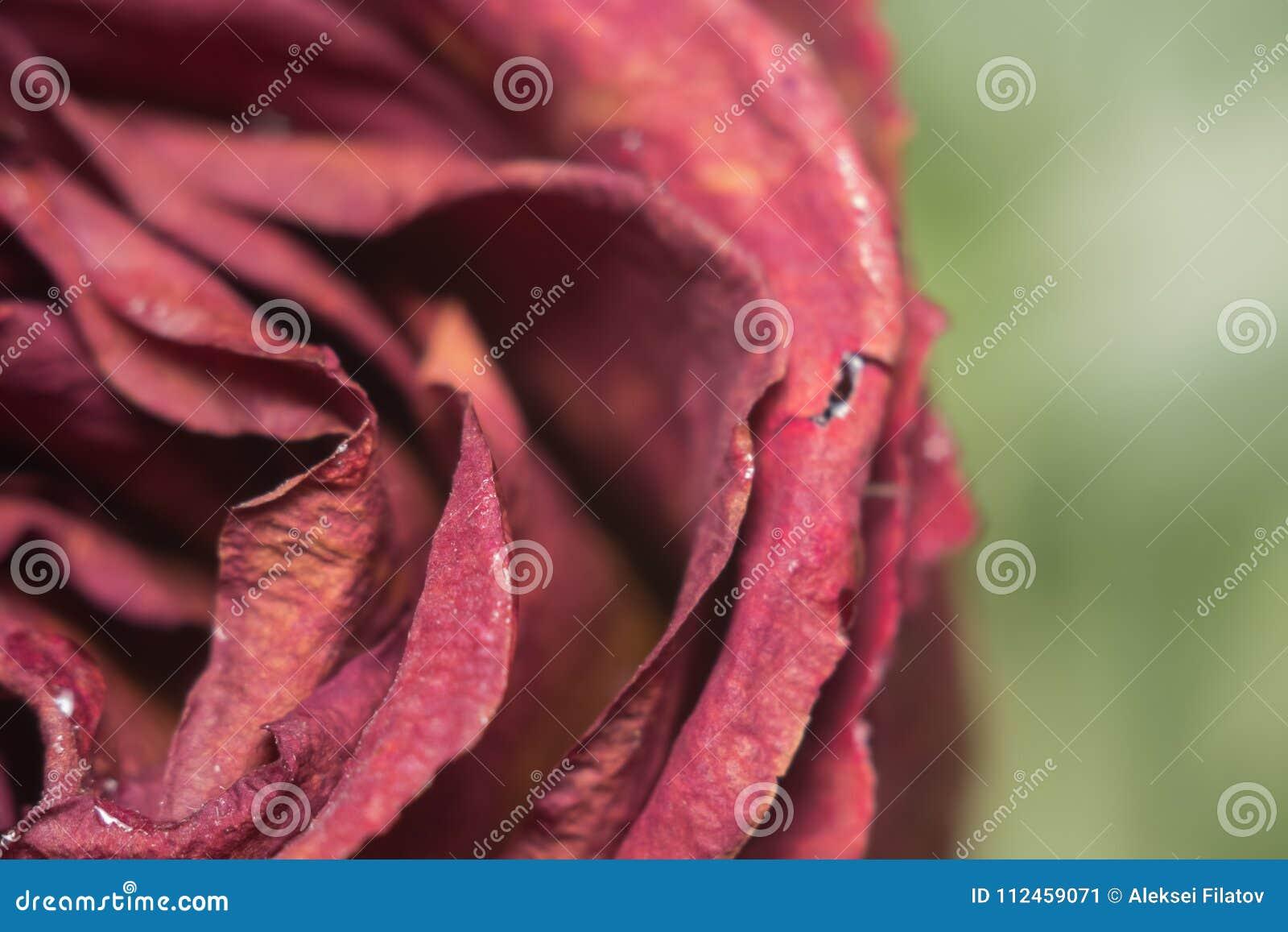 Dead flowers macro