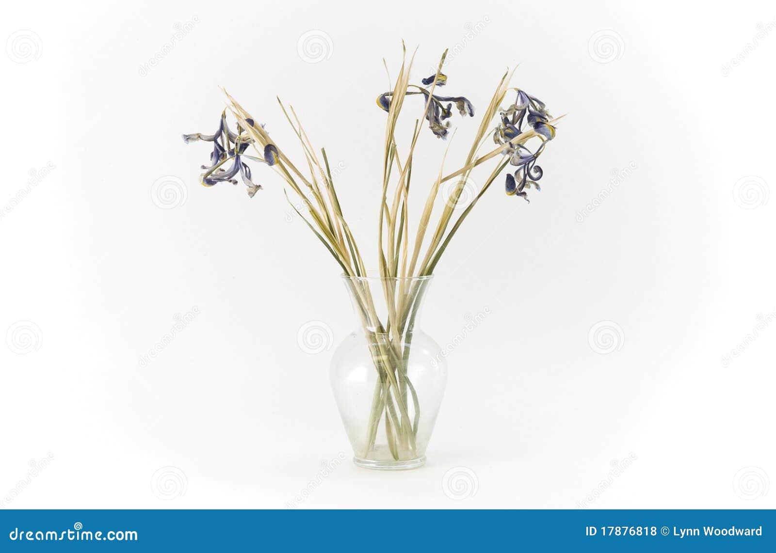Dead Flowers In A Vase Stock Photo Image Of Iris Purple 17876818
