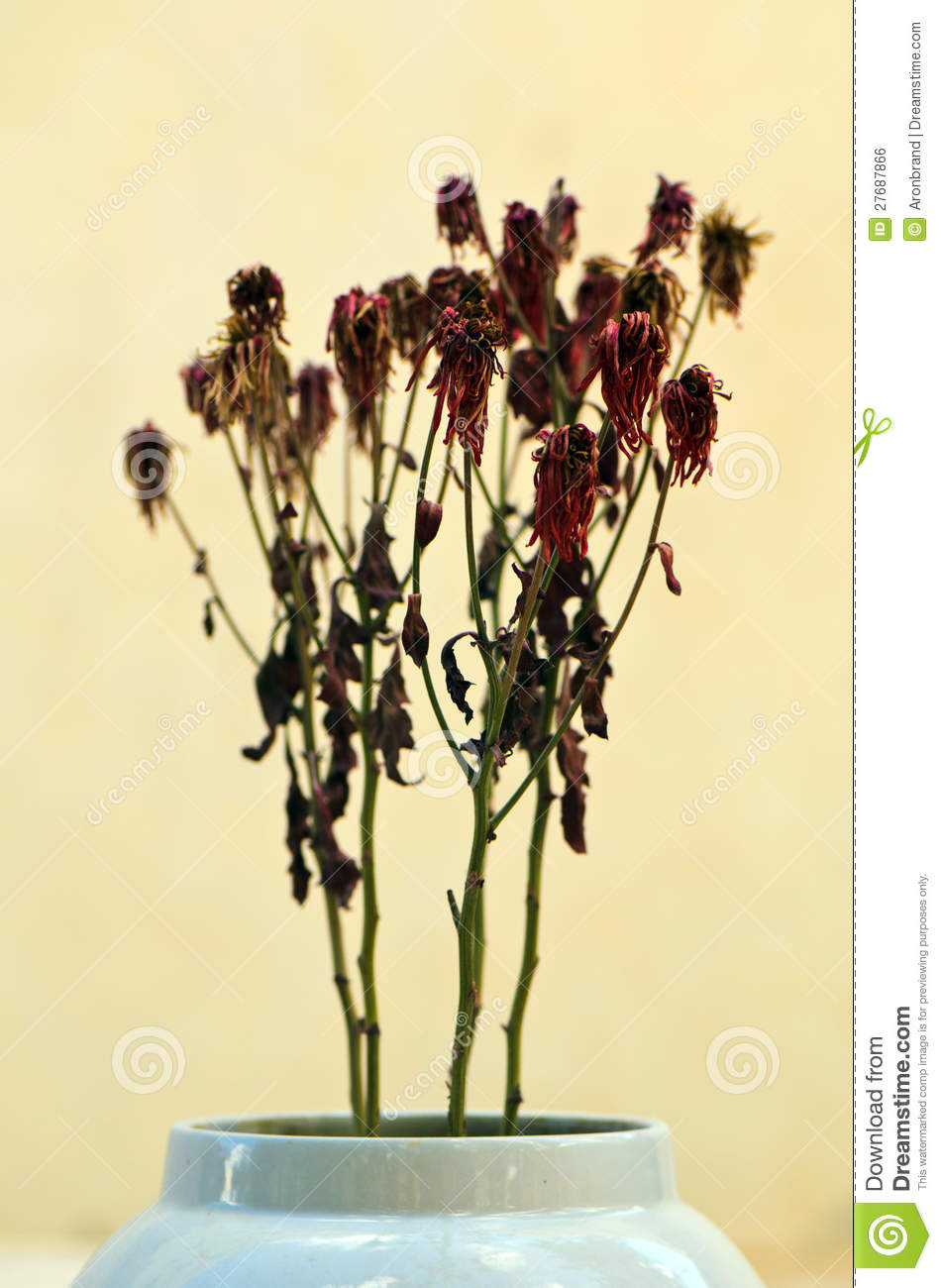 Dead Flowers In Vase Stock Photo Image Of Fall Winter 27687866