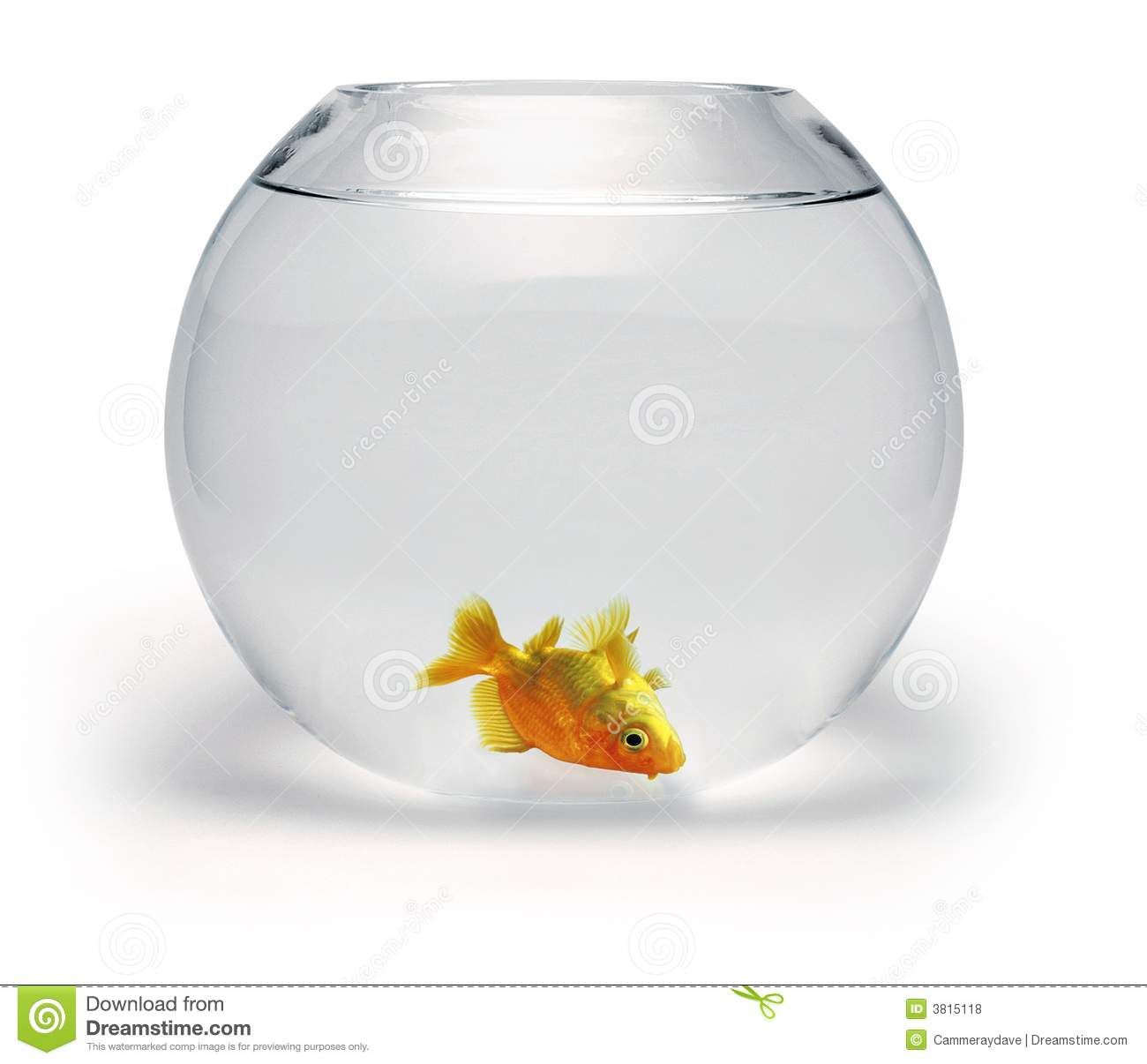 Dead Goldfish Royalty Free Stock Photos - Image: 3815118