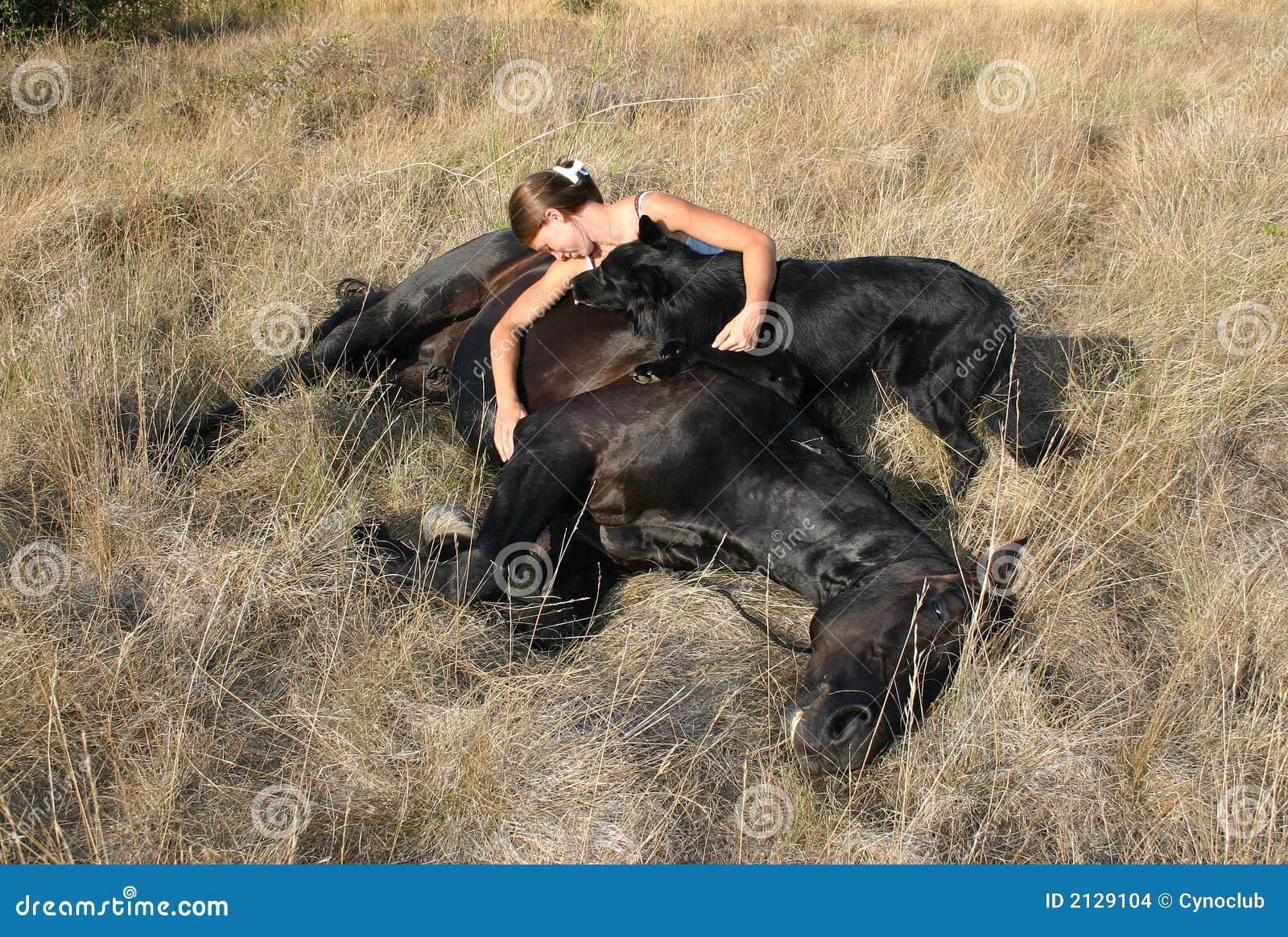dead horse stock photo image of hair  belgian  nature horse vector art free horse vector free