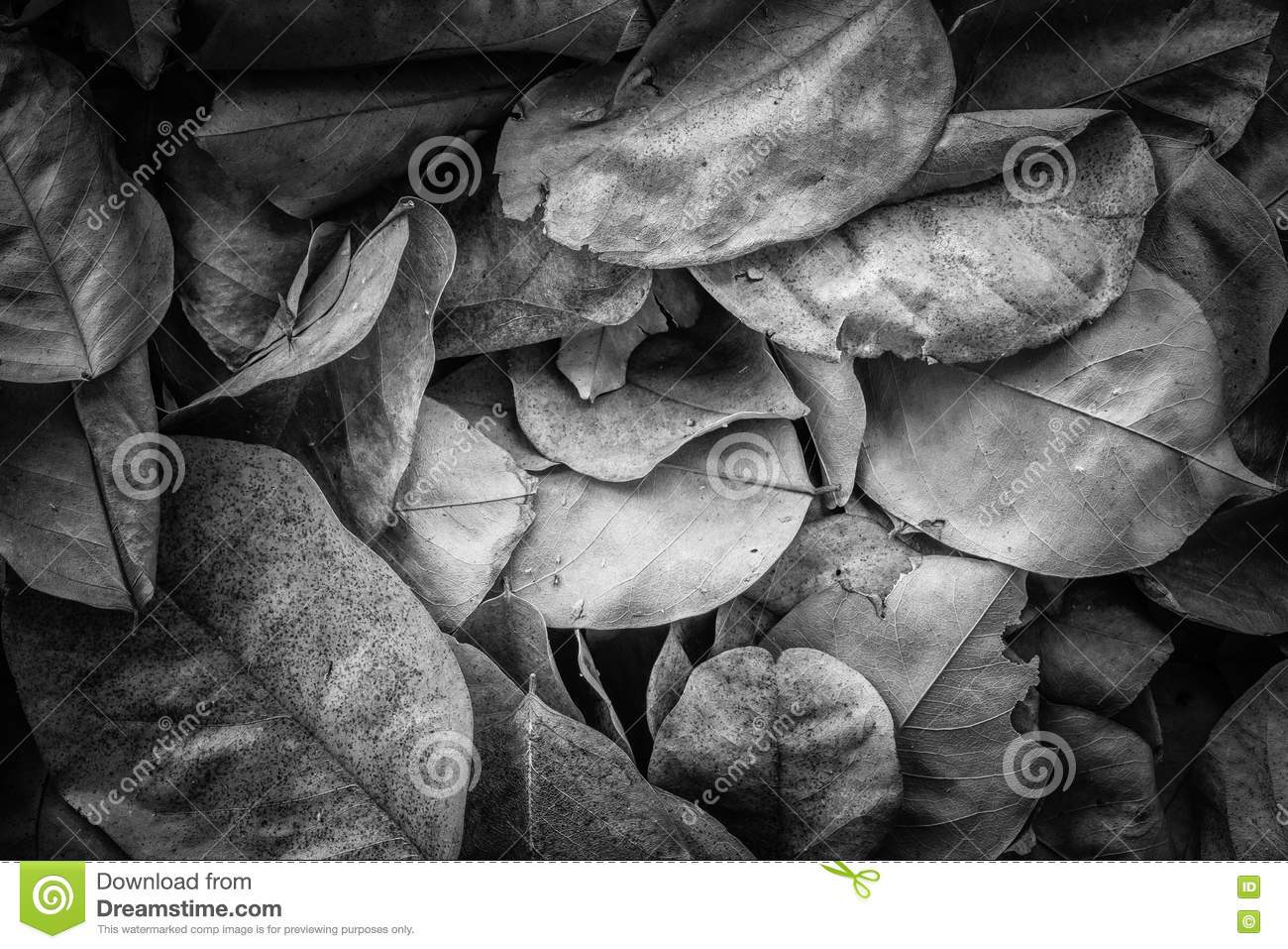 Dead leaves for backgrounds and texturesblack and white tone stock