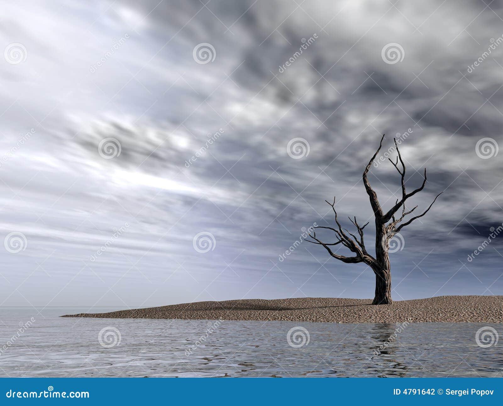 Dead naked tree