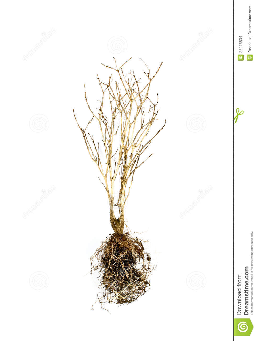 Dead Plant Stock Images - Image: 23916834