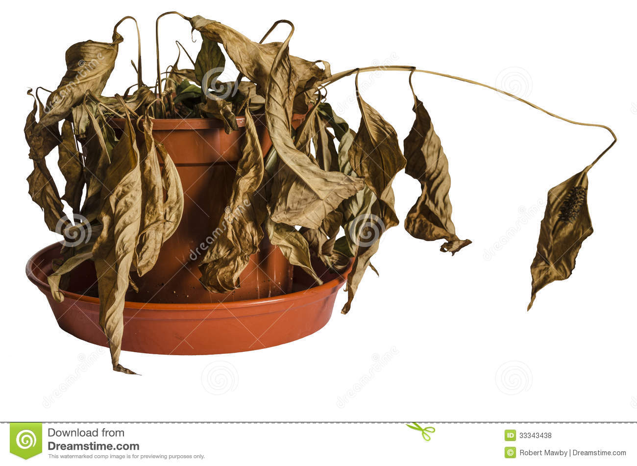 Dead Plant Royalty Free Stock Photos - Image: 33343438