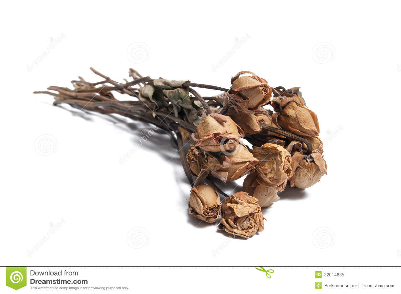 Drawing Floor Plans Free Dead Roses Stock Image Image Of Break Petals Leaves