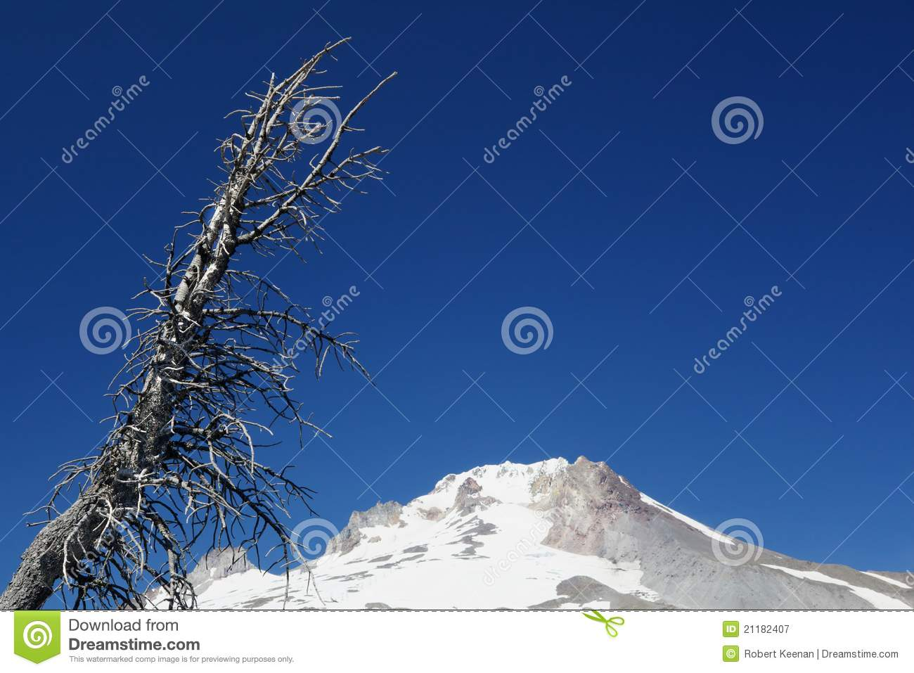 Dead Tree over Mount Hood