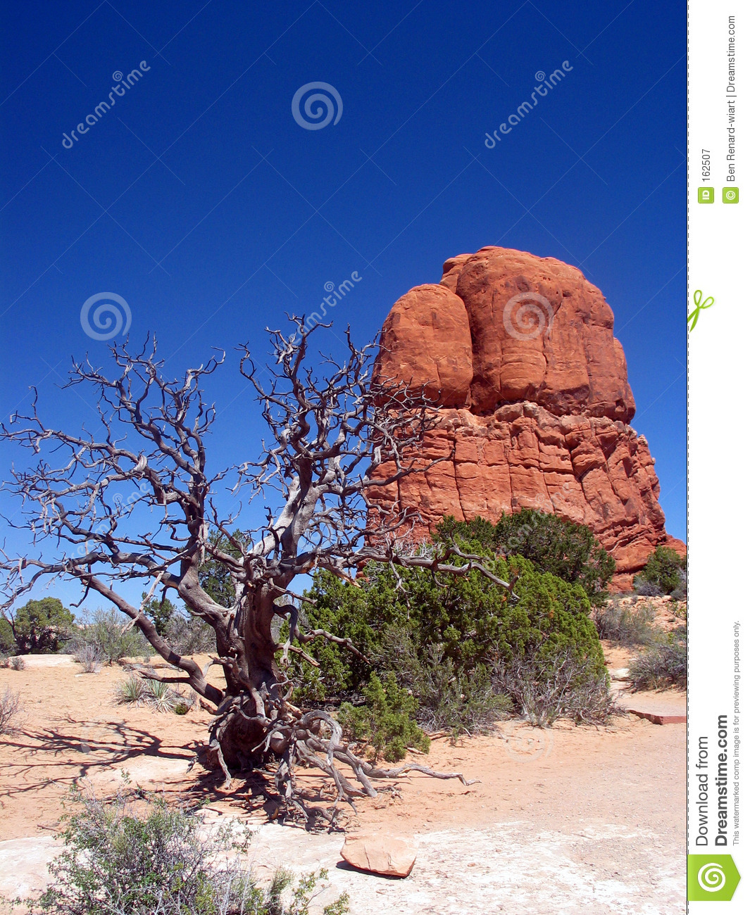 Dead tree in the southern Utah. Arches National Park. Utah.