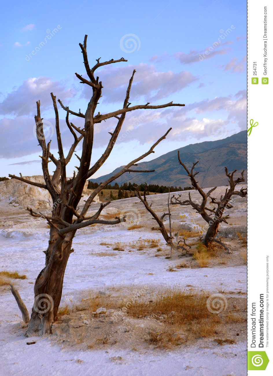 Dead trees on terrace stock image image 254731 for Terrace trees