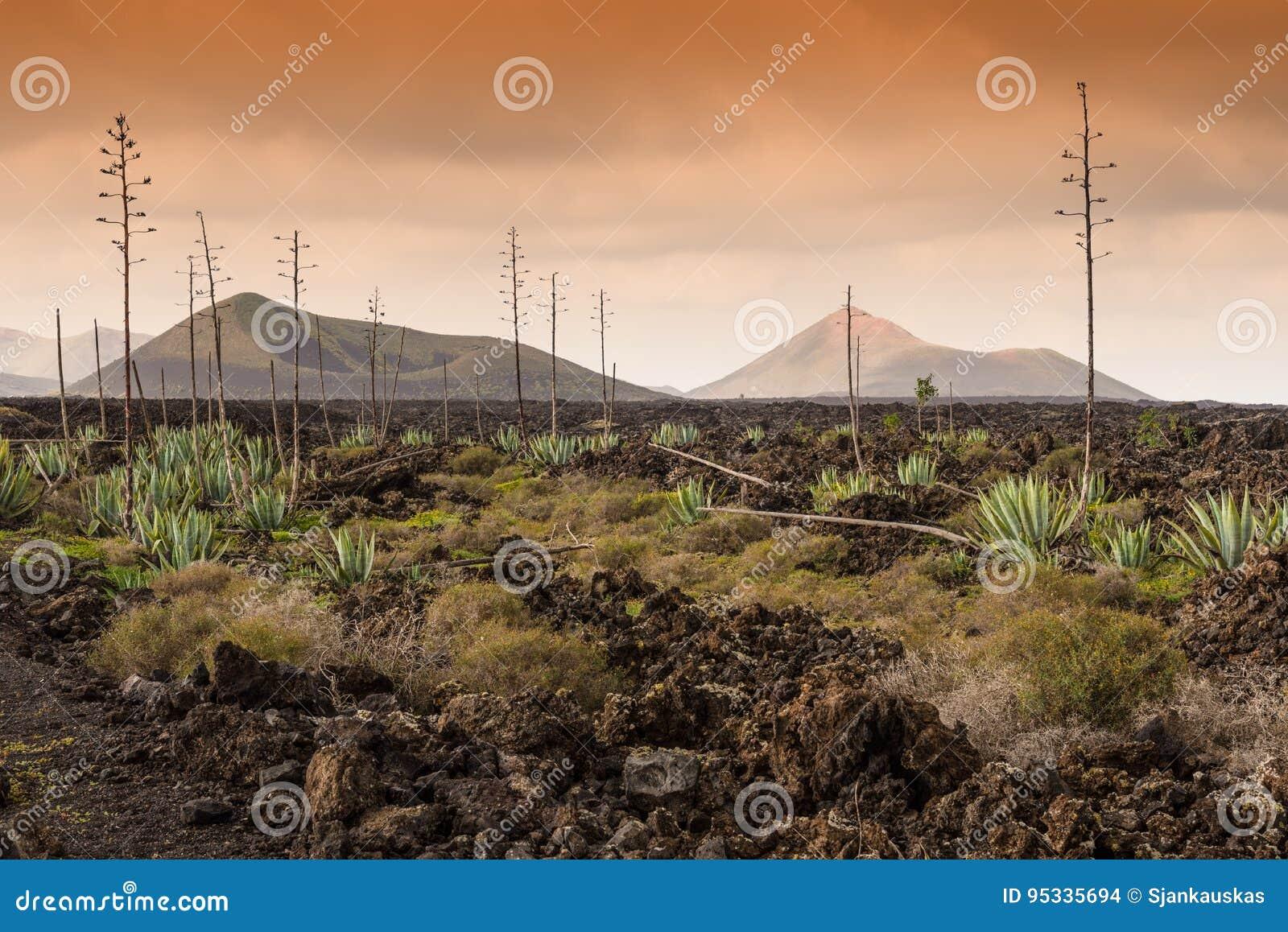 Download Dead Volcanic Land Timanfaya National Park, Lanzarote Stock Photo - Image of land, nature: 95335694