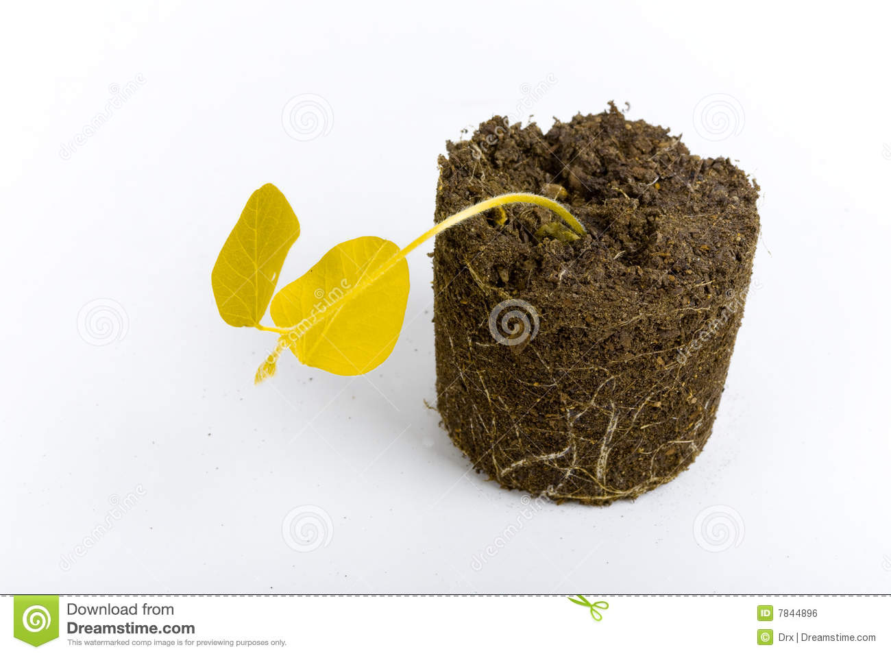 Dead yellow plant concept royalty free stock image image for Soil environment