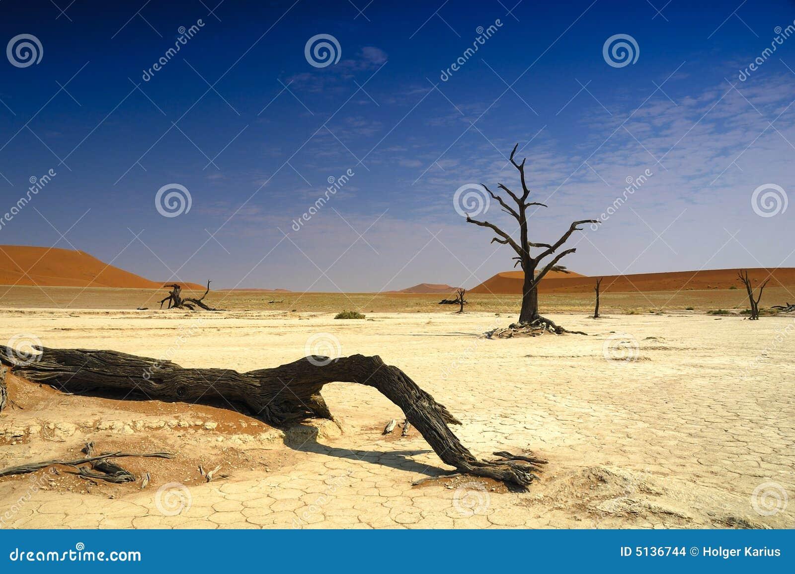 Deadvlei (deserto de Namib)