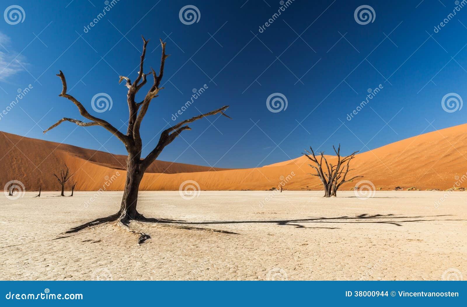 Deadvlei drzewo