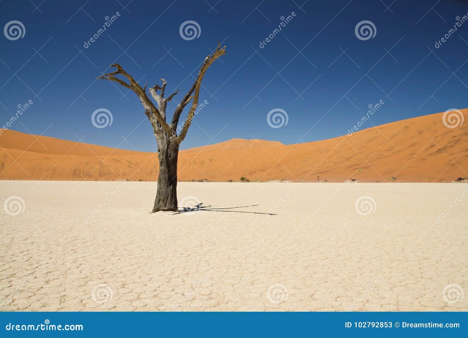 Deadvlei en Namibie