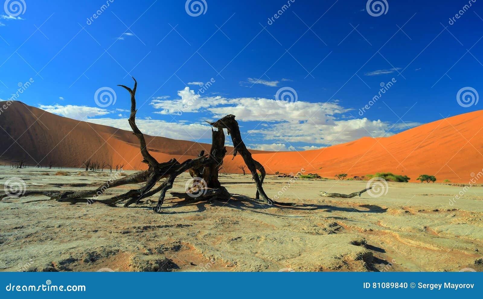Deadvlei in Namib-Naukluft national park, Sossusvlei Namibia