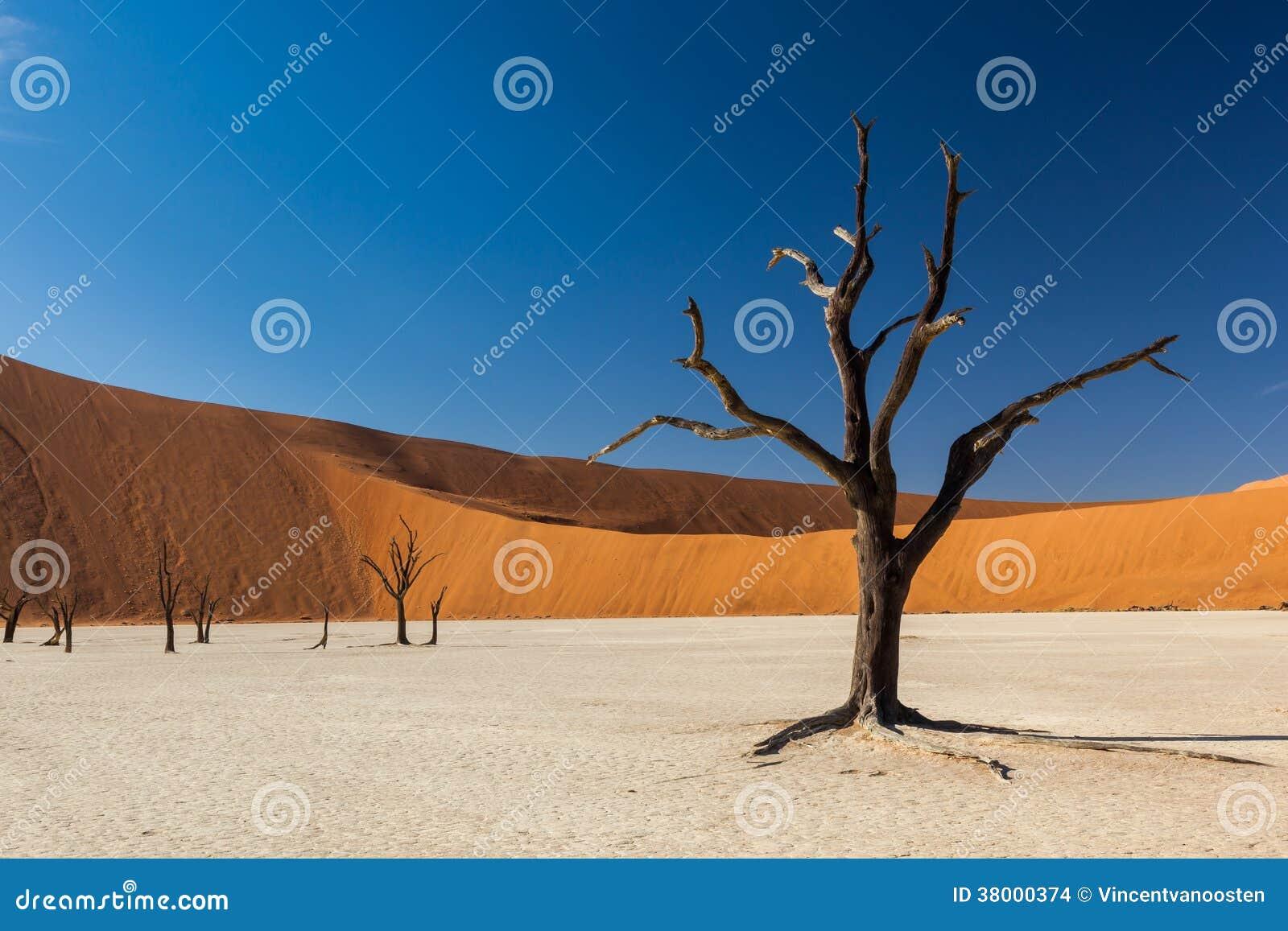 Deadvlei träd