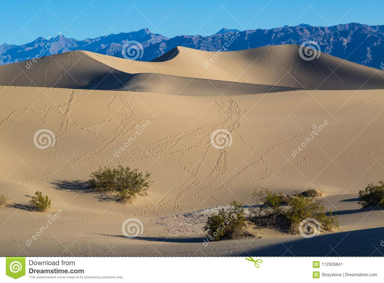 Spring Comes To Dunes >> Death Valley Morning At The Mesquite Flat Sand Dunes Stock Image
