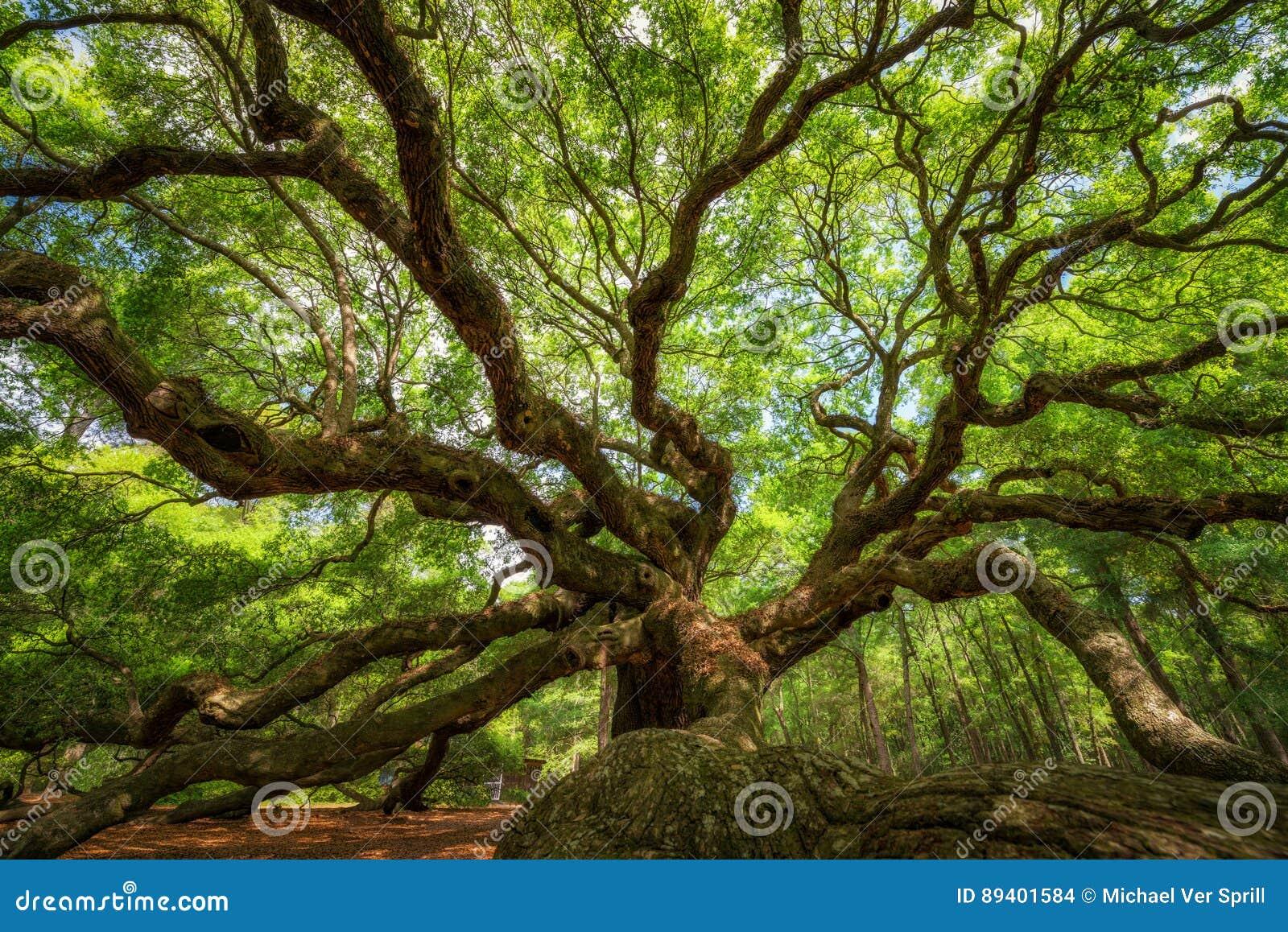 Debajo de Angel Oak Tree