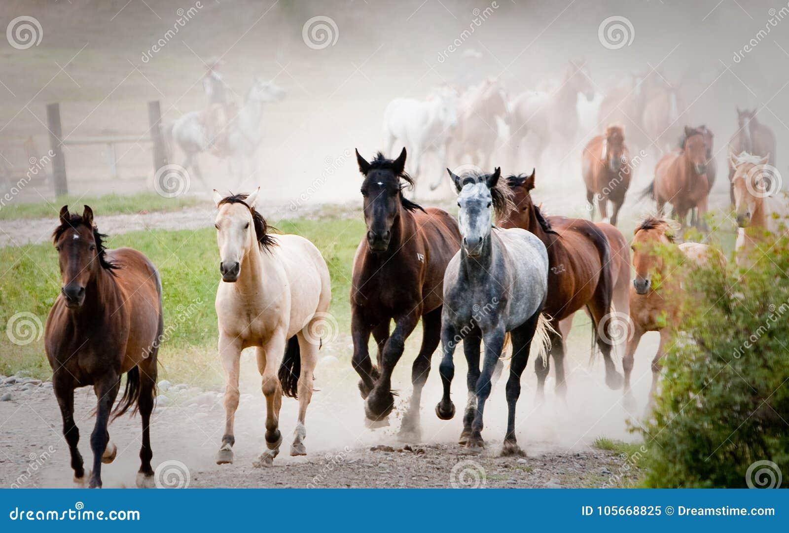 Debandada de cavalos multi-coloridos