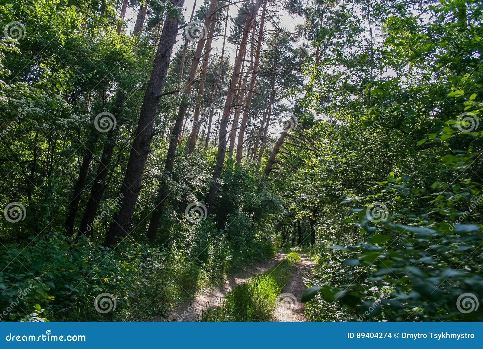 Debrowski a floresta perto da vila de Pokrovka