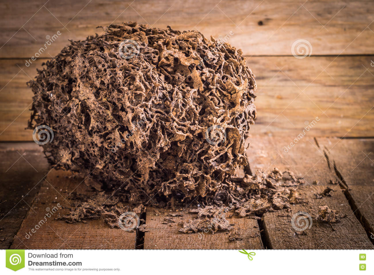 decay brown log destruction by termite stock image image of colony