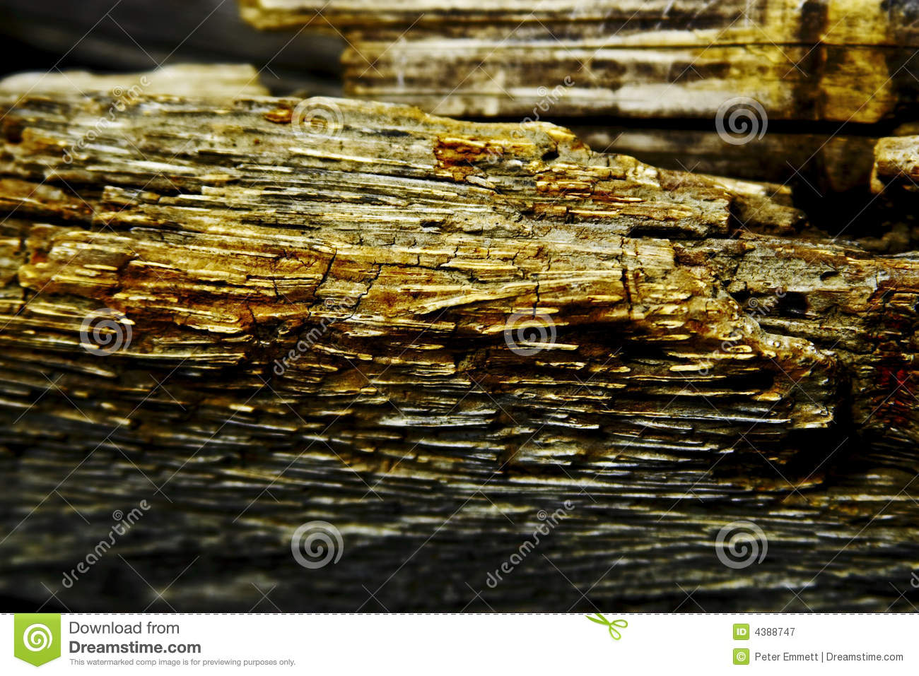 if you have decaying wood , it is the major sign in termite identification
