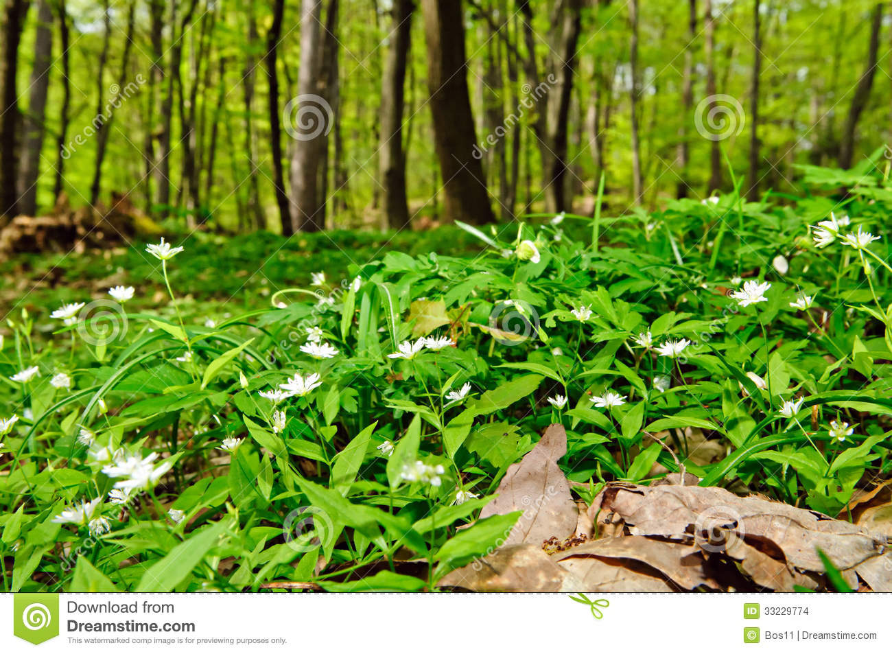 Deciduous Forest Flor Stock Photo Image Of Leaf
