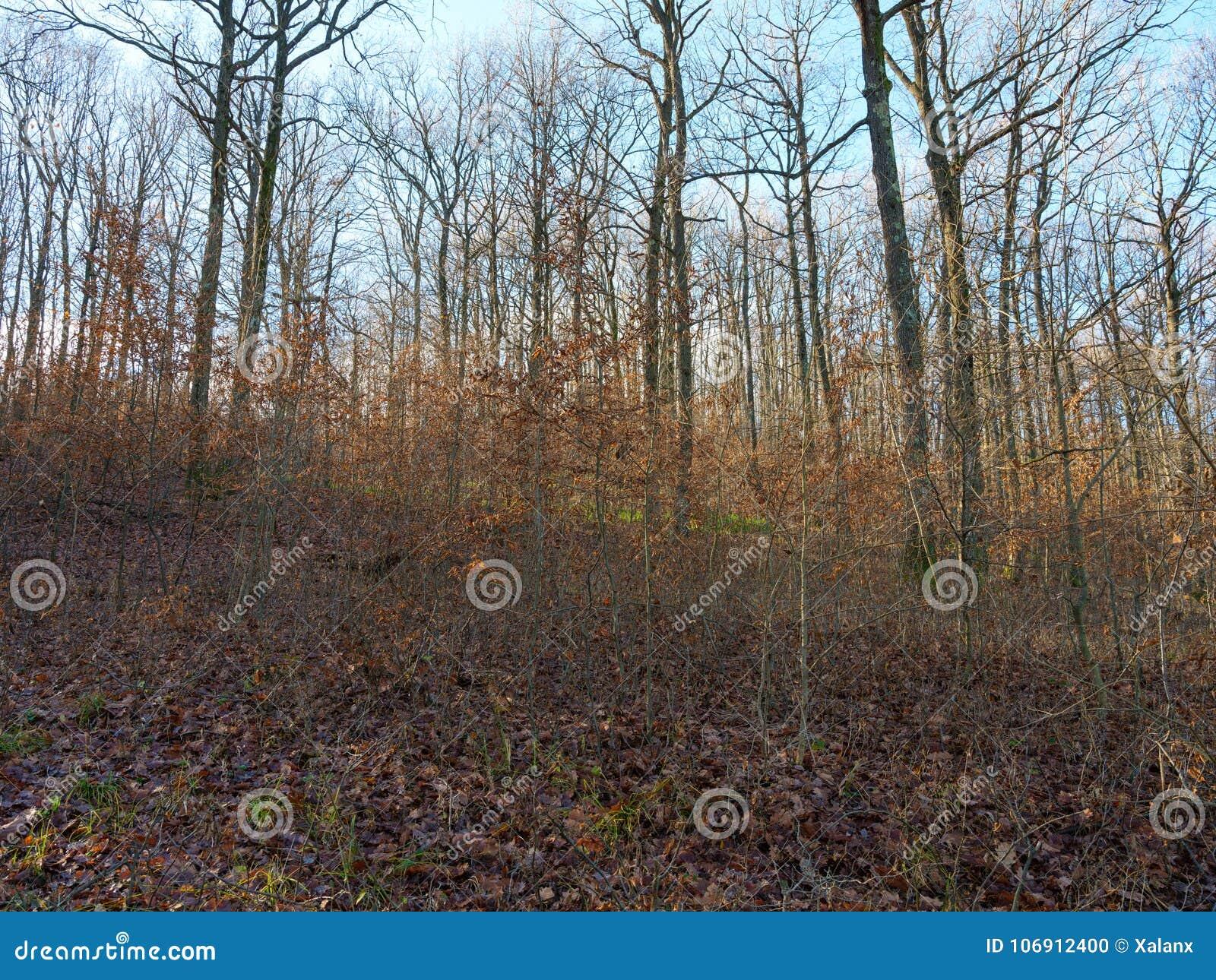Deciduous las w jesieni