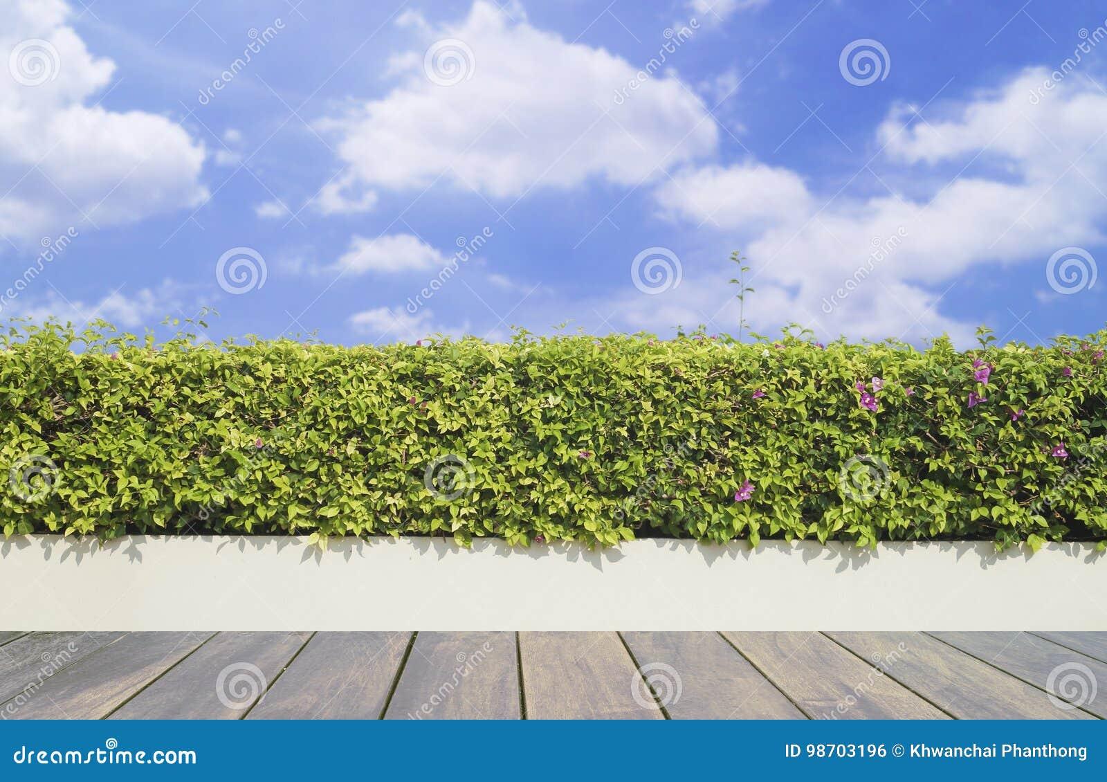 Decking y planta de madera viejos con el jardín de la pared decorativo en el cielo azul