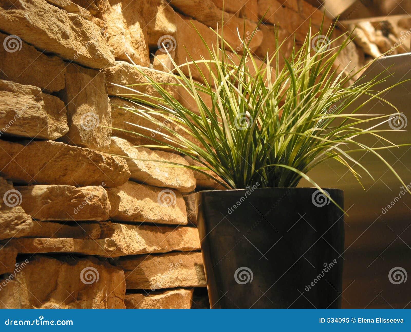 Decoração da planta da grama