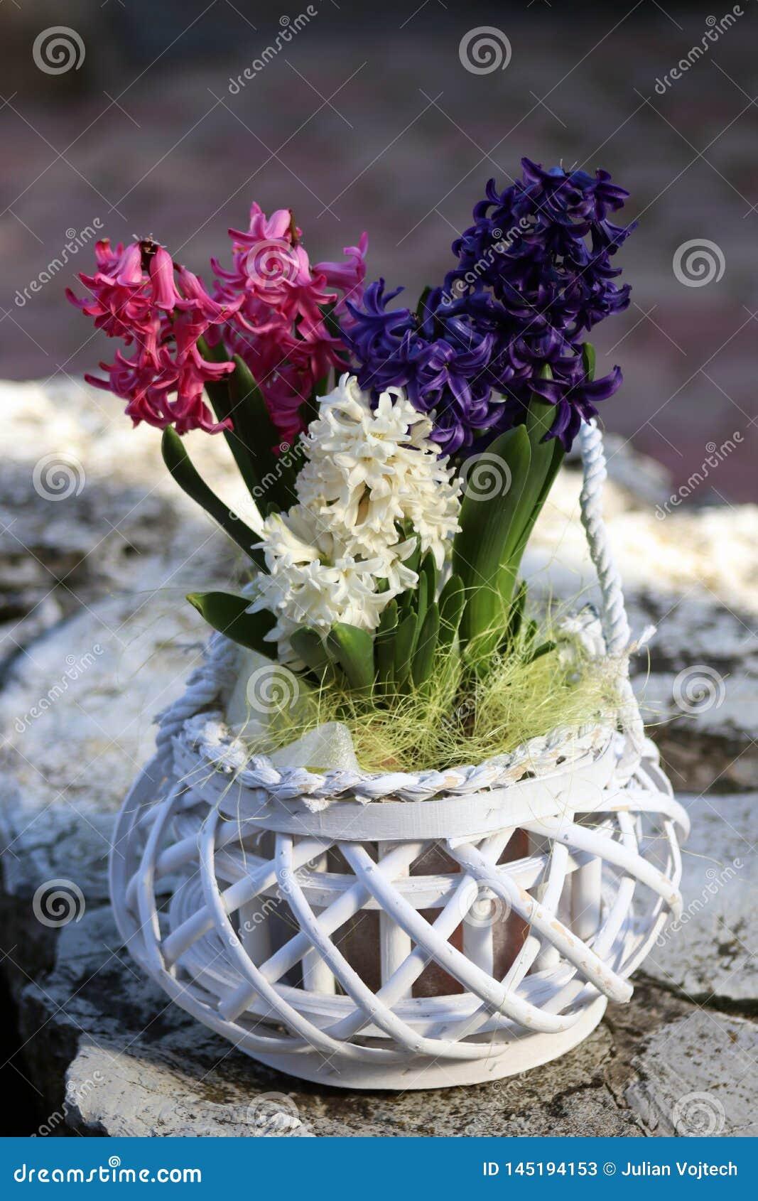 Decoración de la flor en la maceta blanca