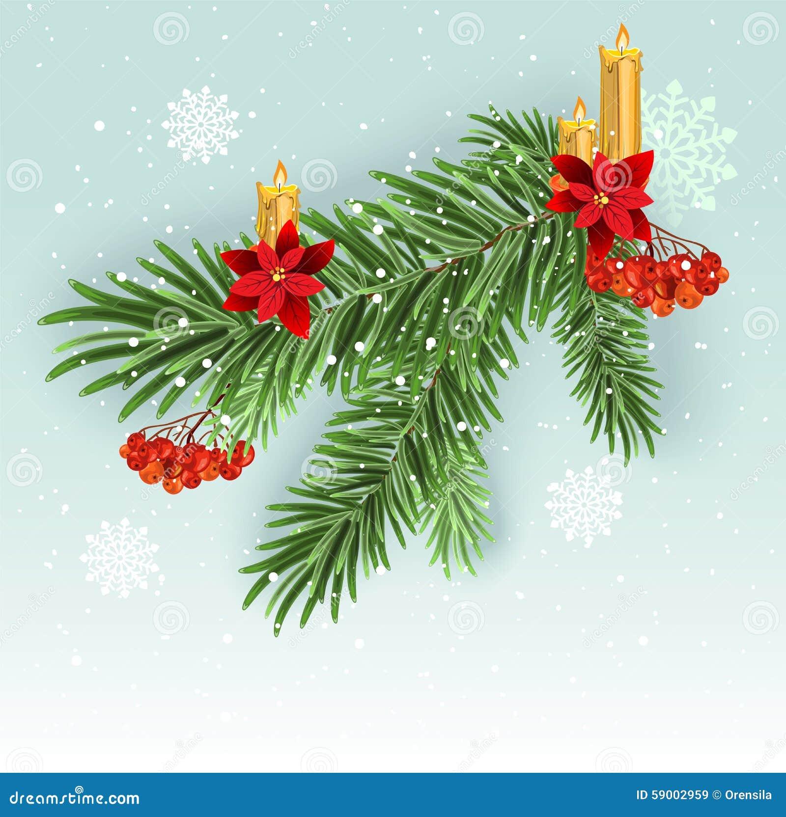 Decoración de la rama de árbol de navidad Rama spruce enorme verde Ramas del abeto
