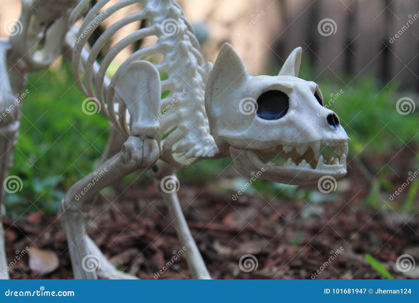Decoración Del Esqueleto Del Gato De Halloween Imagen de archivo ...