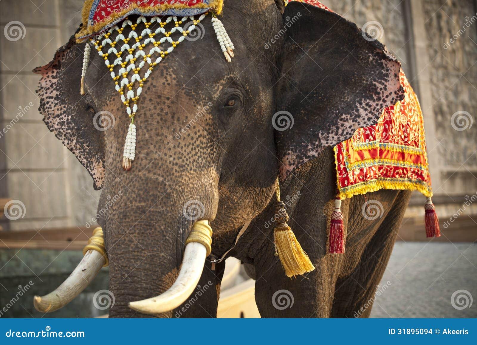 Decorated elephant face - photo#27