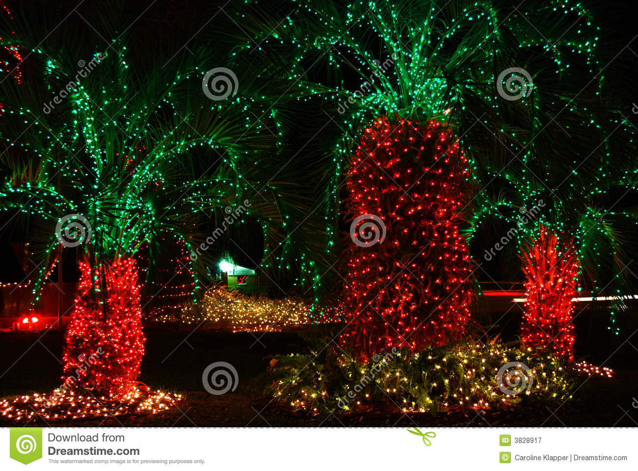 Decorated Palm Trees Stock Image Image Of Tree Untraditional 3828917